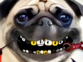 Pug Teeth Problems