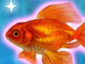 Shining Gold Fish